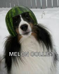 Meloncolly