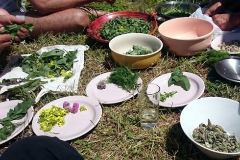 Divja kulinarika-- fera cibum (4)